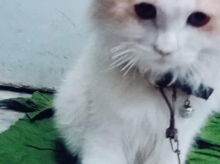 Male cat beautiful