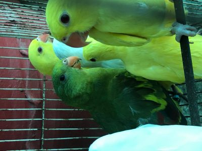 healthy and active parrots looking for new homes