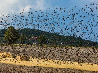 Ultrasonic Bird Repeller Protecting Crops