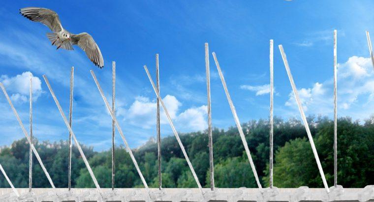 Bird Spikes Barrier In PAKISTAN