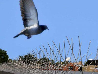 Bird Pest Control Solution Bird Spikes Barrier